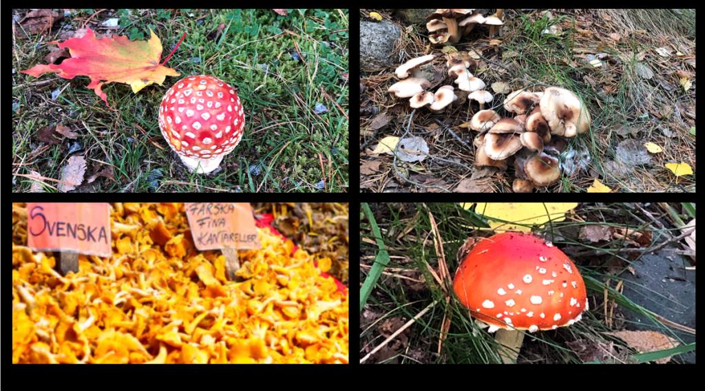 Cette image a un attribut alt vide; le nom du fichier est champignons2.jpg.png